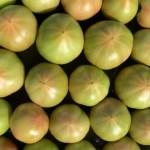 お試し価格でお値段をお安くした採れたてわけありトマト4キロ