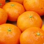 甘平。愛媛県でのみ栽培、販売が許されるプレミアム、高級品種です。
