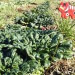 お家でご飯&初売り】野菜セット 耕さない畑から気候危機をかえる  ポリマルチフリー
