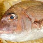 真鯛1尾  日本海の荒波にもまれた、美味しい天然鯛です。