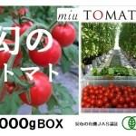飯田農園のmiuトマトは月間1t未満の超希少生産の超高糖度トマト