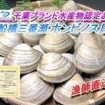 20%増量中】船橋三番瀬ホンビノス貝2㎏⇒2.4㎏【千葉ブランド水産物認定品】