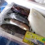 産地直送とは違う、こだわって処理した本当に美味しい魚が詰まったセット