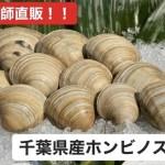千葉県 富津産 緊急値下げ!!ホンビノス貝5kg 【 LLサイズ