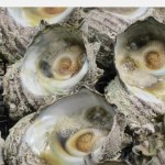天然活サザエ2.5kg(18-22個) 山口県萩沖で取れた天然サザエ