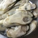水温が下がり牡蠣の身がぷりぷりになる1月〜3月は間違いなく美味しい!