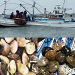 千葉県ブランド水産物認定品 九十九里地はまぐり  2キロ入