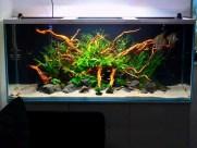 Дизайн аквариума 6