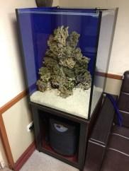 Укладываем коралловый песок