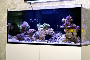 Дизайн аквариума 3
