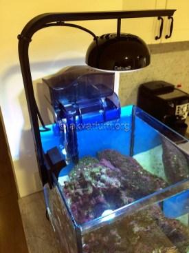 morskoy-akvarium-5.5
