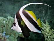 reef-fish-4