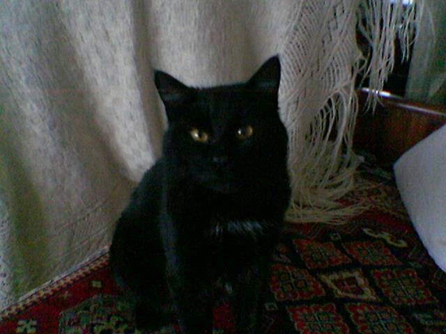 A Black Cat In A Dark Room Enhancement Of A Mobile Camera