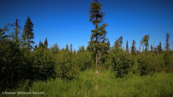 C25 Alaskan Wildwood Ranch®