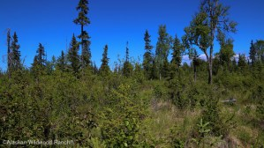 C7 Alaskan Wildwood Ranch®
