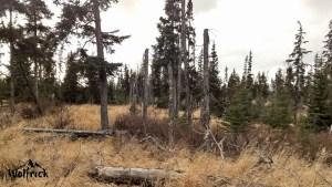 D1 Alaskan Wildwood Ranch®