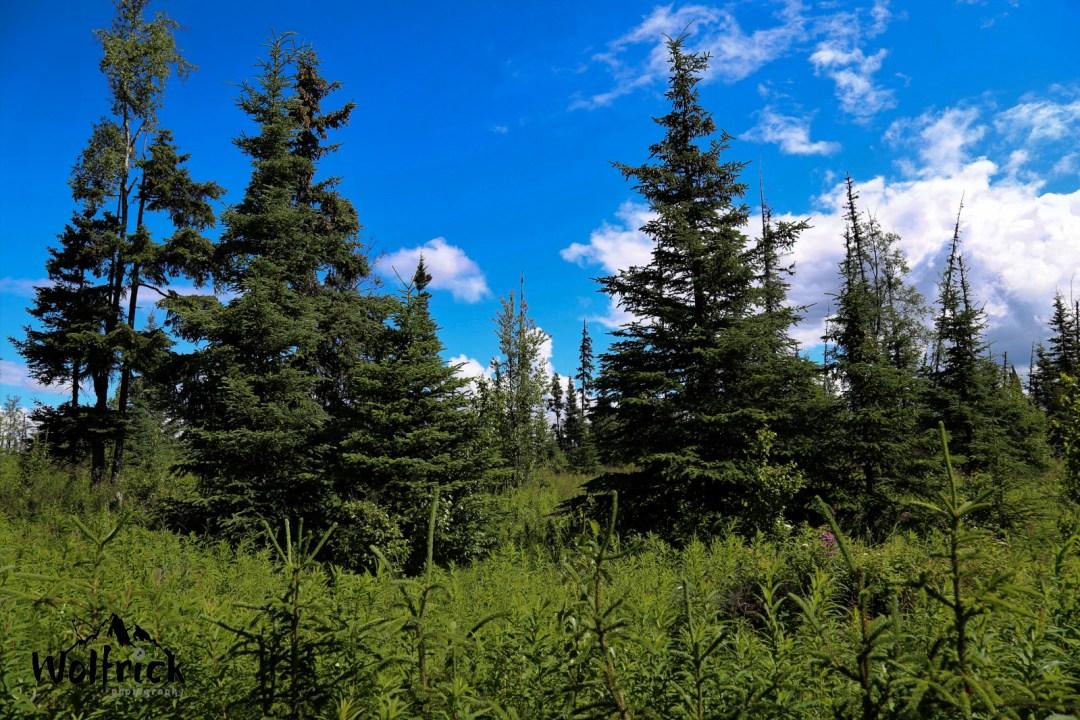 D25 Alaskan Wildwood Ranch®
