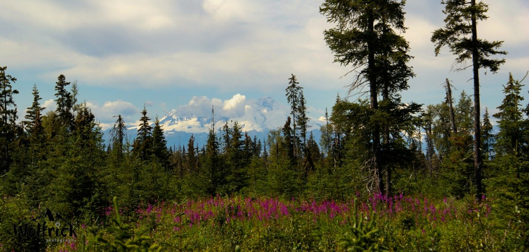 D29 Alaskan Wildwood Ranch®