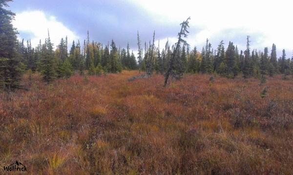H25 Alaskan Wildwood Ranch® | ©Alaskan Life Realty