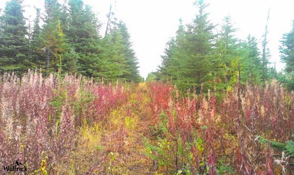 H26 Alaskan Wildwood Ranch® | ©Alaskan Life Realty