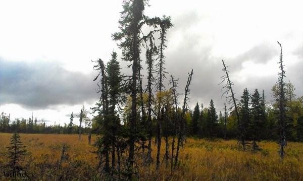 H27 Alaskan Wildwood Ranch® | ©Alaskan Life Realty
