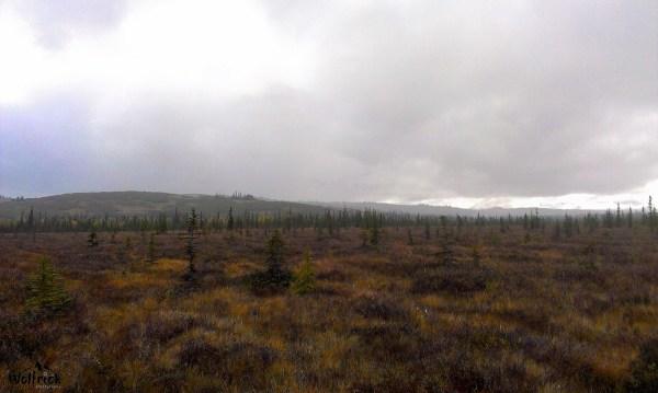 H45 Alaskan Wildwood Ranch® | ©Alaskan Life Realty