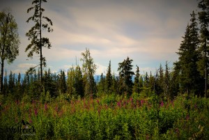 D19 Alaskan Wildwood Ranch®