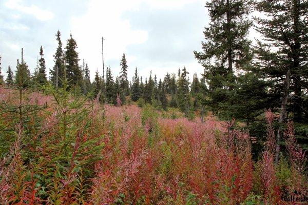 Alaskan Wildwood Ranch®