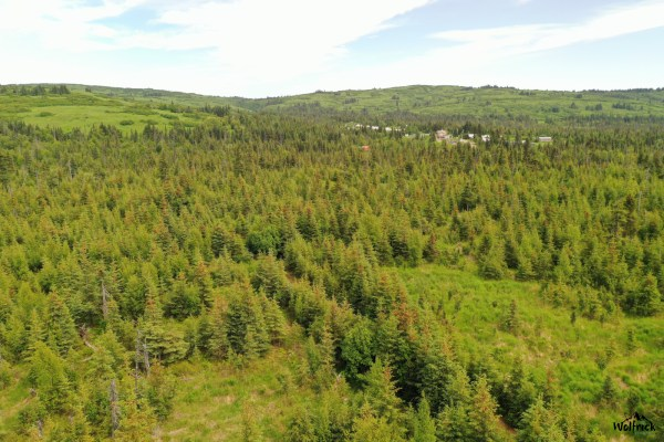 C22 Alaskan Wildwood Ranch®