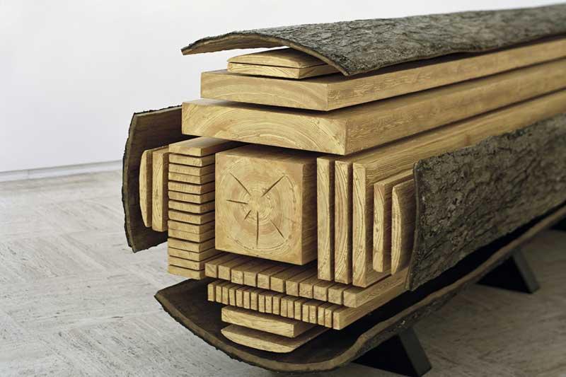 يختلف شكل و خواص الخشب بإختلاف موقعه في الشجرة