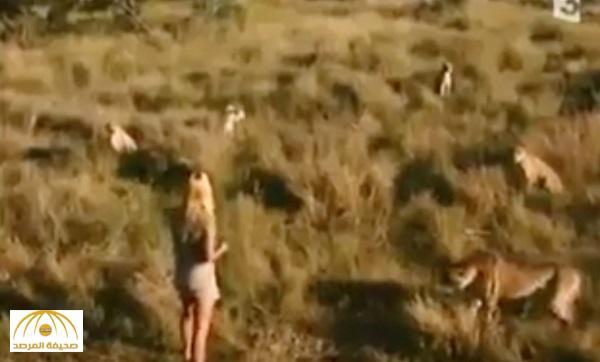 """فيديو مرعب لفتاة وسط مجموعة من النمور .. اشترته """"ناشيونال جيوجرافيك"""" بمليون دولار!"""
