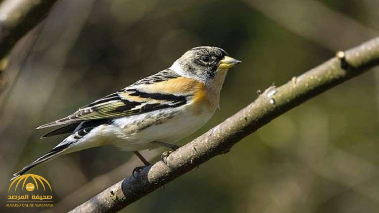 """""""عصافير داروين"""" تعود بنظرية التطور إلى الواجهة"""