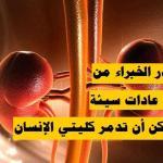 باحثون يحذرون من 10 عادات خاطئة تدمر «كلى الإنسان».. الثاني أخطرها !-فيديو