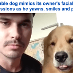 شاهد..كلب يقلد تعابير وجه صديقه البرازيلي يثير إعجاب المشاهدين!