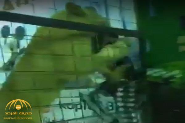 شاهد .. لحظة هجوم أسد على طفلة خلال فعالية بجدة