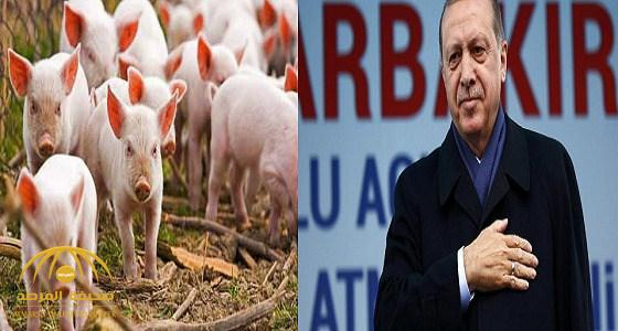 أردوغان يسمح باستيراد لحوم الخنازير من البوسنة والهرسك