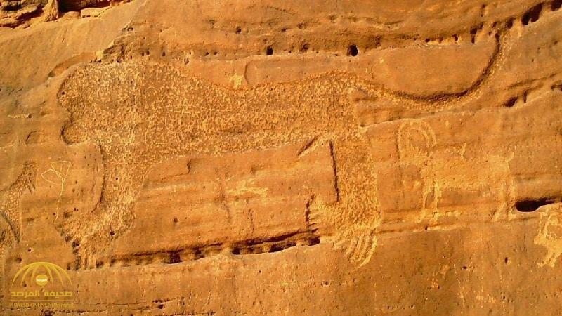 بالصور : السبب وراء نقش صورة أسد على صخرة ضخمة قبل 10  آلاف عام في السعودية!