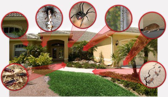 مكافحة الحشرات بالمنزلية شركة مكافحة حشرات بالرياض شركة مكافحة حشرات بالرياض 0567600026