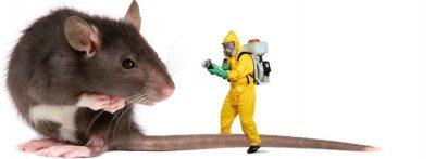 شركة مكافحة فئران بالرياض شركة مكافحة الفئران بالرياض شركة مكافحة الفئران بالرياض 0501515313