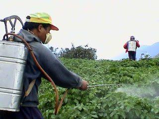 رش مبيدات حشرية بمكة شركة رش مبيدات حشرية بمكة 0500031519 Spray pesticides in Mecca