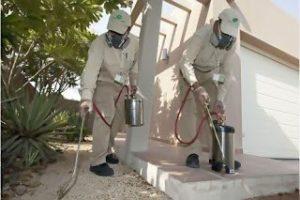 شركة رش مبيدات حشرية بتبوك
