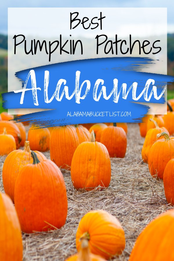 Fall is here and with the autumn season comes the pumpkin patch, a favorite fall activity. Here are the best pumpkin patches in Alabama! #pumpkinpatch #pumpkin #pumpkins #alabama #fall #autumn #family #fun