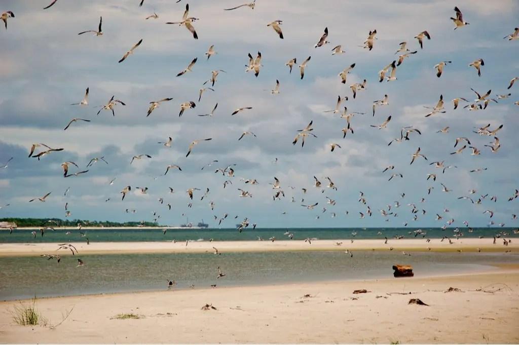 beach scene on Dauphin Island, Alabama