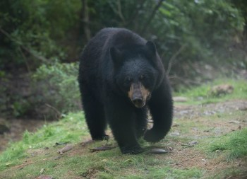The Birmingham Zoo. (Bernard Troncale/Alabama NewsCenter)