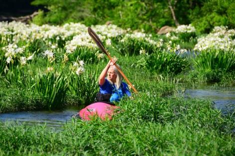 Helen Todd paddles through Cahaba lilies on the Cahaba River. (Karim Shamsi-Basha/Alabama NewsCenter)