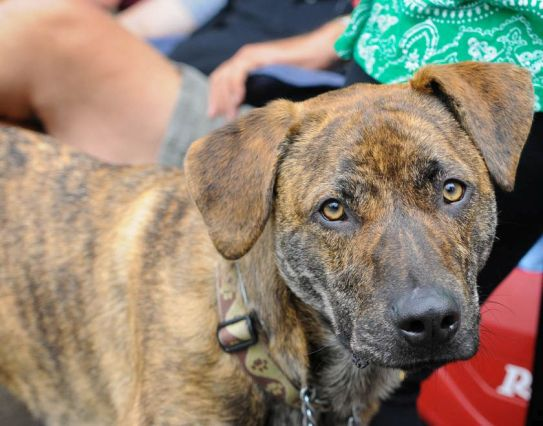 Dog days are welcome at Do Dah Day. (Photo courtesy of Lee Little)