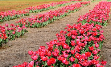 A bevy of beautiful blooms await. (Donna Cope / Alabama NewsCenter)