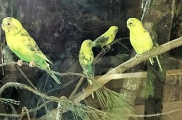 Parakeets are fun to watch. (Donna Cope / Alabama NewsCenter)