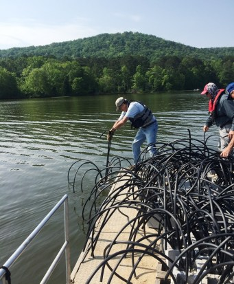 Members of the Neely Henry Lake Association sink fish habitat made from concrete and PVC pipe, which they expect to last 20 years or more. Wooden habitat tends to decay in three to five years. (Allison Westlake/Alabama NewsCenter)