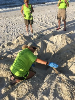 A Share the Beach section leader excavates a nest. (Share the Beach)